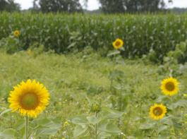 Im Mittelpunkt des Gesetzentwurfes zur EU-Agrarreform  steht die Umsetzung des Greenings.