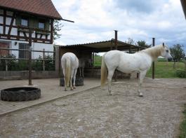 Anders als Boxenpferde müssen Pferde im Offenstall nicht zwingend täglich bewegt werden.