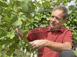 Jules Nijst vom Gut De Wijngaardsberg ist Mitbegründer der Ursprungsbezeichnung Mergelland, die nur Vitis-vinifera-Reben erlaubt.