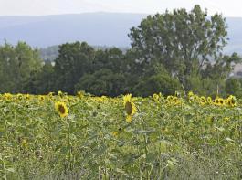 Im Entwurf der Novelle des Landesnaturschutzgesetzes geht es auch um Neuerungen beim naturschutzrechtlichen Vorkaufsrecht des Landes für land- und forstwirtschaftliche Flächen.
