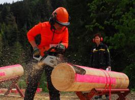 Der Umgang mit der Motorsäge gehört zur Ausbildung in einem Holz- oder Sägewerk dazu.