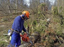 Die Aufräumarbeiten im Wald kosten eine Stange Geld.