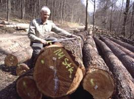 Ein Förster kluppt Douglasien-Stämme, die gepoltert an einer Forststraße liegen – das Bundeskartellamt sieht in der gemeinsamen Vermarktung von Holz aus dem Privat- und Staatswald einen Kartellrechtsverstoß.