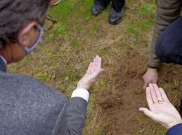 In Prinzbach war der Boden noch so warm, dass im Beisein von Minister Peter Hauk unter der Grasnarbe mühelos Engerlinge freigelegt werden konnten. Man musste nur leicht unter den  ergrauten Stellen der Wiese scharren.