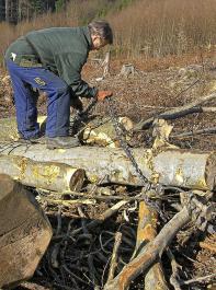 Forst rentiert sich, meint Savills.