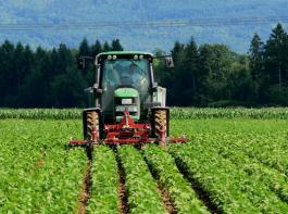 Eine Eiweißstrategie (Bild: Soja) in Deutschland bleibt möglich, weil überzogene Regelungen bei Eiweißpflanzen vermieden werden, urteilt der DBV über die Einigung in der Regierungskoalition.
