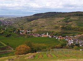 """Vogtsburg im Kaiserstuhl ist mit rund 1400 Hektar Rebfläche die flächengrößte weinbaubetreibende Gemeinde in Baden-Württemberg und trägt nun auch das Siegel """"Weinsüden Weinorte"""". Hier ein herbstlicher  Blick auf die Teilorte Schelingen und Oberbergen."""