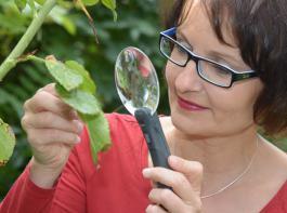 Cornelia Maute, Referentin, Beraterin für Pflanzenhomöopathie und Buchautorin untersucht einen Rosenstock auf Schädlinge hin.