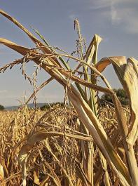 Die Agrarsprecher begrüßen den Vorschlag des Bundeslandwirtschaftsministeriums für eine Absenkung der Versicherungssteuer auf Dürrepolicen von jetzt 19 Prozent auf 0,03 Prozent.