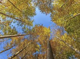 Laut dem Verband Familienbetriebe Land und Forst  werden im Mittel pro Hektar Wald fünf Tonnen  Kohlenstoff im Jahr gespeichert.