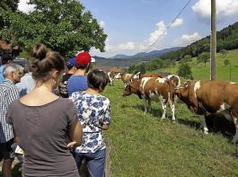 Beste Vorderwälder-Mutterkühe gab es  bei Familie Moser in Biberach-Prinzbach zu sehen.