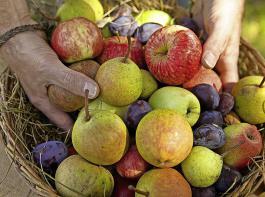Das Erntedankfest gibt Anlass, sich über die reiche Ernte 2018 zu freuen.
