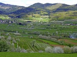 Baden-Württemberg ist das Land des Streuobstbaus.