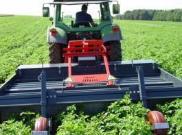 Die thermische Krautregulierung in Kartoffeln wird in Donaueschingen untersucht.