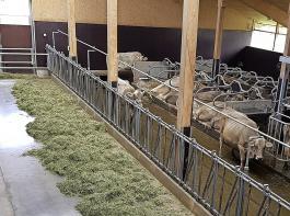 Bei der Verfütterung von Belüftungsheu nehmen die Kühe im Vergleich zu Silage  im Schnitt ein bis zwei Kilogramm mehr  Trockenmasse auf.