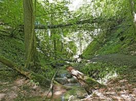Bachgluckern und Vogelgezwitscher samt schönem Pfad – das macht die Klingenbachschlucht aus.