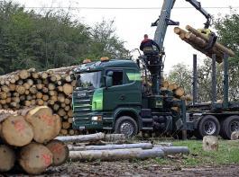 Ein Spezialtransporter lädt Holz zum Abtransport aus dem Wald.