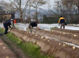 Landwirtschaftsverbände begrüßten den Kabinettsbeschluss, Gewerkschafter und Grüne übten heftige Kritik.