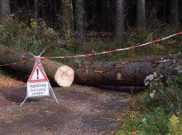 Profis am Werk: Zur Waldarbeit gehören aber neben dem Fällen von Bäumen unter anderem auch Aufforsten,   Wildtier- und Naturschutz.