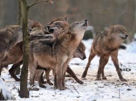 Die beiden Ministerinnen Julia Klöckner und Svenja Schulzesehen Gesprächsbedarf zum Thema Wolf.