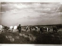 Diese historische Aufnahme zeigt einen Hütejungen auf einer Viehweide am Brend bei Furtwangen.