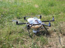 Multicopter, beladen mit Trichogramma-Kapseln gegen Maiszünsler.