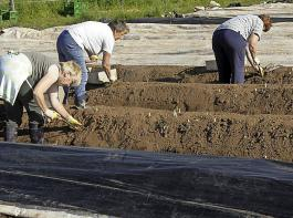 Der Deutsche Bauernverband rechnet damit, dass in diesem Jahr wieder 280000 ausländische Saisonarbeitskräfte bei der Ernte von Sonderkulturen  zum Einsatz kommen.