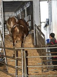 Die Sonderregelung für ungeimpfte Tiere endet zum 17. Mai.