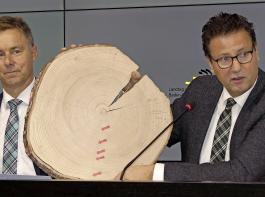 Peter Hauk und Max Reger erklären anhand einer Baumscheibe  die Erholung und  das stärkere Wachstum einer Weißtanne seit  der Zeit des Baumsterbens in den 1980er-Jahren.