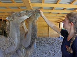 Seit Kurzem gibt es auch fünf Kamele bei Tatzmania, um die sich Tierpflegerin Stefanie Jehle kümmert.