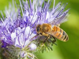 Der Schutz der Insekten und ganz besonders der Bienen bewegt derzeit die Politik in Bund und Land.