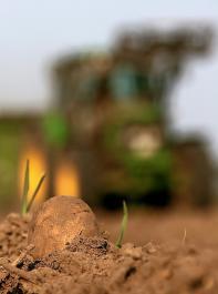 Die Studie der Universität Löwen beziffert bei Verzicht auf Pflanzenschutzmittel die Ernteeinbußen bei Kartoffeln auf 42 Prozent und bei Weizen auf 19 Prozent.