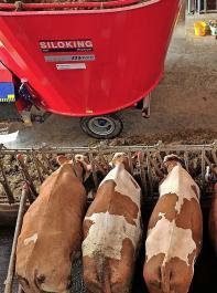 Wie sich unterschiedlich hohe Kraftfuttergaben in einer TMR mit hoher Grobfutterqualität auf die Milchleistung auswirken, wurde am LAZBW  Aulendorf untersucht.