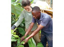 In Uganda erhalten Praktikanten zum Beispiel Einblicke in die Abläufe auf einer Bananenplantage.