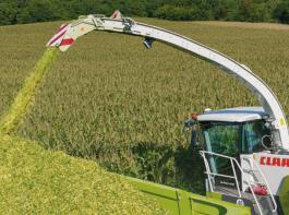 Bei Shredlage wird der Mais auf 22 bis 30 mm gehäckselt.