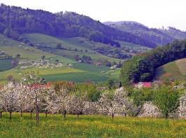 Der BLHV fordert von der Landesregierung zu berücksichtigen, dass Baden-Württemberg  bereits eine kleinstrukturierte Agrarlandschaft mit vielen Landschaftselementen aufweist.