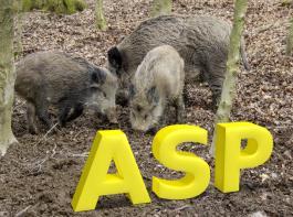 Der amtliche Verdachtsfall der Afrikanischen Schweinepest (ASP) in Brandenburg hat sich mittlerweile bestätigt.