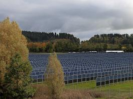 Geht es nach der Länderkammer, sollen die Gebotshöchstwerte für Agrar-PV-Anlagen mit 8 Ct/kWh über jenen für Solar-Freiflächenanlagen liegen.