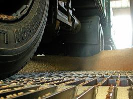 Zügig geht die bereits in den letzten Junitagen gestartete Weizenernte voran, kommende Woche startet sie auch in den späteren Gebieten in Südbaden.