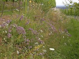 Böschungen können sehr blütenreich sein und Schmetterlingen und anderen Insekten einen Lebensraum bieten.