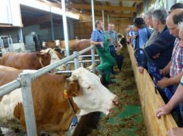 Jürgen Moser (links) hält jetzt 70 Milchkühe, vorher waren es 42 Stück.