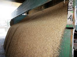 In dieser Woche läuft die Getreideernte in Südbaden auf Hochtouren.