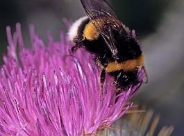 Eine artenreiche Begrünung bietet Blütenbesuchern Nahrung.