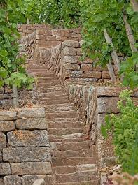 Trockenmauern sind Lebensraum für zahlreiche Insekten und Reptilien.