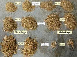 Hier wurden die Shredlage und die konventionelle Maissilage eines Betriebes je zweimal in der Schüttelbox gesiebt. Es gilt noch Erfahrungen zu sammeln, welche Verteilung für Shredlage optimal ist.