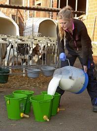 Wie viel Kälber trinken, ist sehr unterschiedlich. Im Durchschnitt sind es 8 bis 11l am Tag – je nach Alter. Nach frühestens drei Wochen kann man damit beginnen, die Milchmenge  auf täglich 8l zu beschränken.