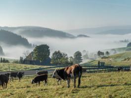 Die Arbeitsgemeinschaft für Höhenlandwirtschaft (AfH) will am 11. Februar die Bedeutung der Milchviehhaltung im Schwarzwald hervorheben.
