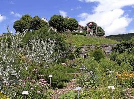 Im barocken Schau- und Lustgarten der Schlossdomäne Wildegg sind an die 300  Pflanzen zu Schauzwecken angepflanzt – eine Fundgrube für Interessierte. Die Samengärtnerei selbst  liegt am Fuße des Schlosshügels.