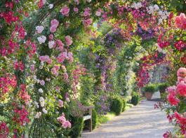 Eines unserer Gartenziele auf der diesjährigen BZ-Gartenfahrt ist der Rosenneuheitengarten am  eutig bei Baden-Baden.