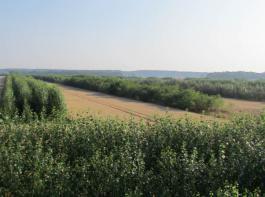 Agroforstsystem – Ackerkulturen und Gehölze auf einem Schlag